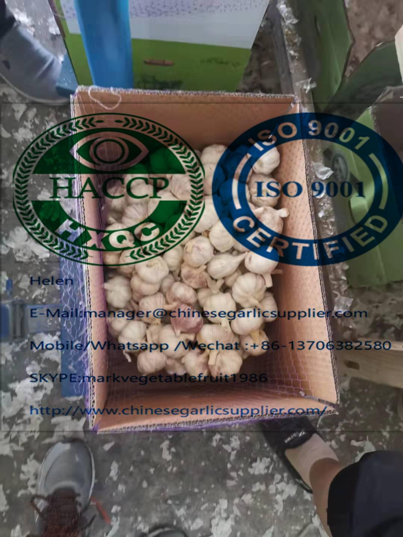El cartón de 10 kg de ajo suelto / CTN para el mercado de África