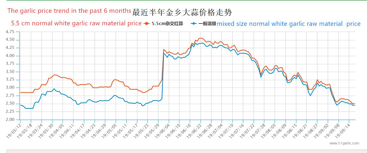 Tendencia del precio del ajo en los últimos 6 meses