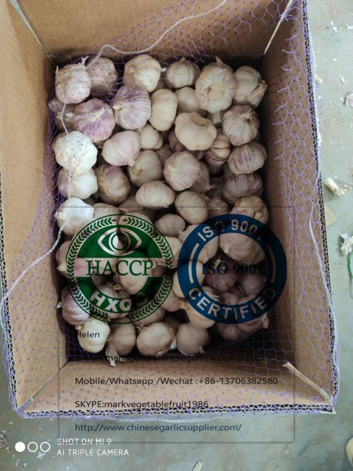 El ajo blanco normal con 10 kg de cartón suelto al mercado de Senegal.