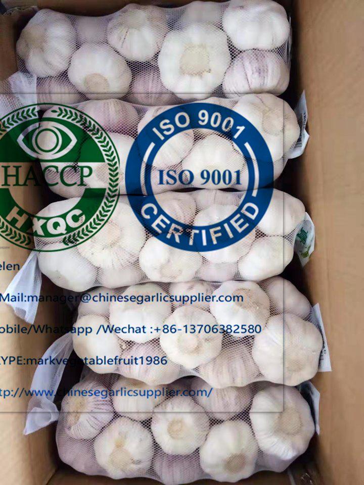 El ajo blanco puro con 500 * 20 bolsas / CTN para el mercado de Ghana